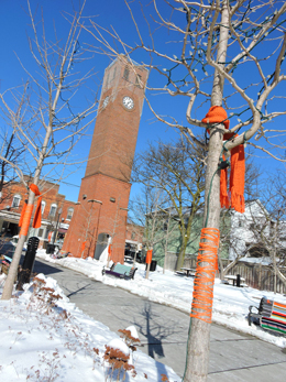 WS YOU 177 Orange Scarf Yarnstorming, photo courtesy of Stouffville Sun-Tribune, photographer Steve Somerville